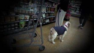 Shoppers question rising number of dogs taken into South Florida grocery stores