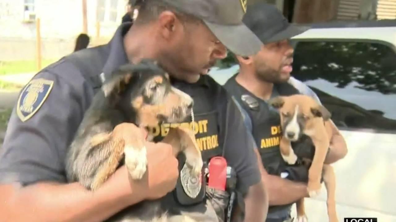 Detroit police make animal cruelty arrest20180629212307.jpg