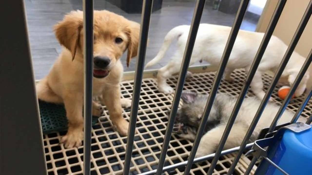 pet store dog2_1538172687452.JPG.jpg