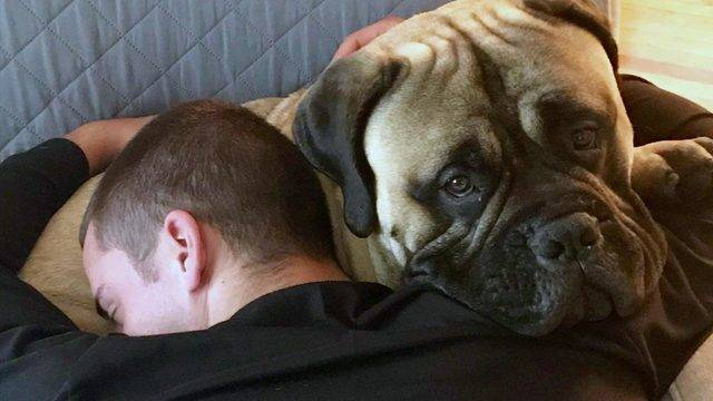 bullmastiff is thrilled to see his military owner return home