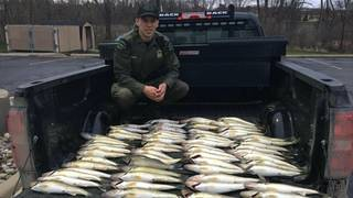 Michigan DNR conservation officers confiscate 80 walleye from