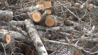 Veterans say they were ripped off by Jacksonville tree trimmer