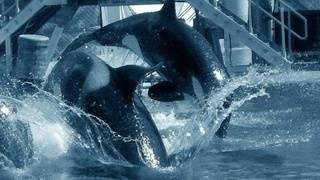 SeaWorld, former CEO pay $5 million in 'Blackfish' settlement