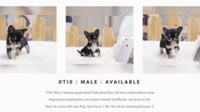 Tampa Bay Craigslist Pets