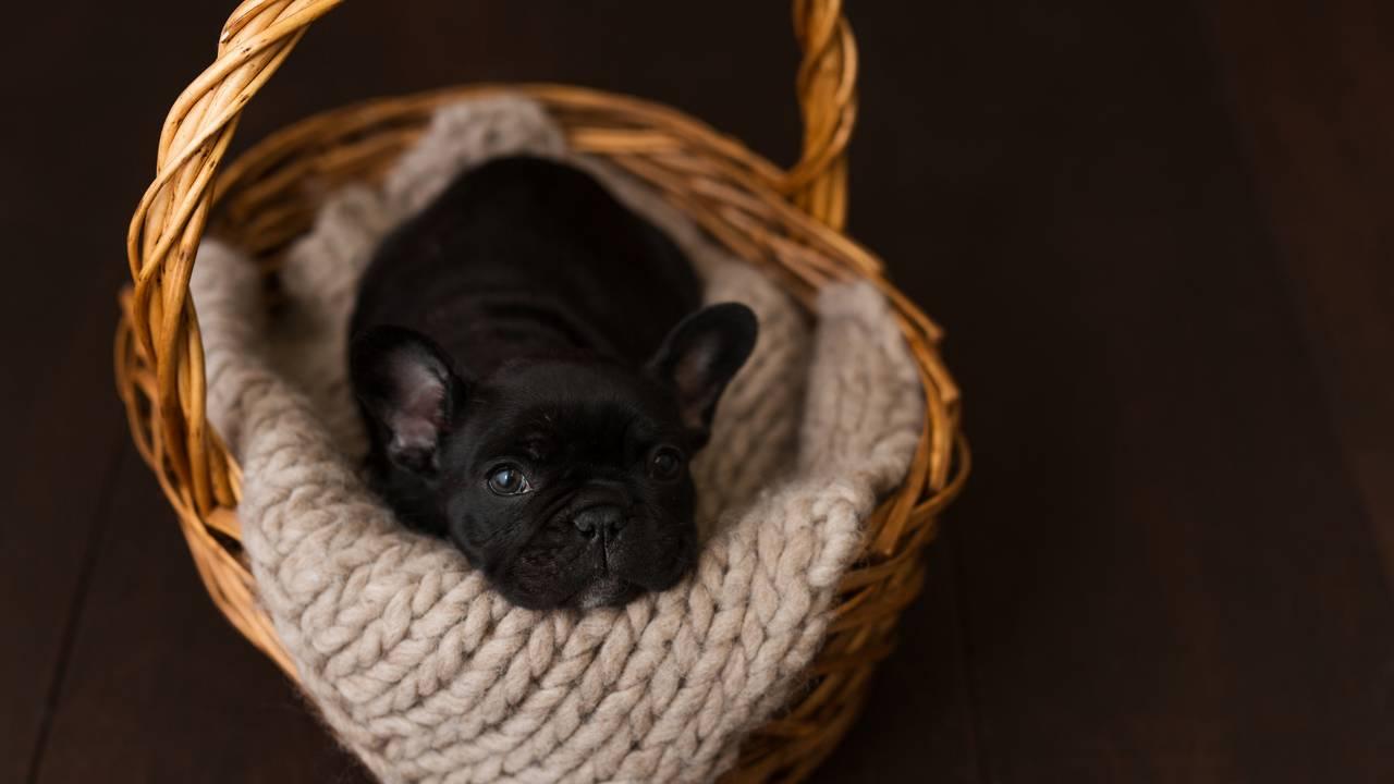 Olive Puppy Newborn-Olive Puppy Newborn-0024.jpg