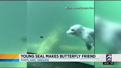 Seal makes friends with butterfly