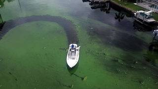Algae panel puts together 'road map' for Florida lawmakers