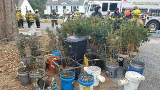House fire uncovers more than $200K marijuana grow in town of Pearisburg