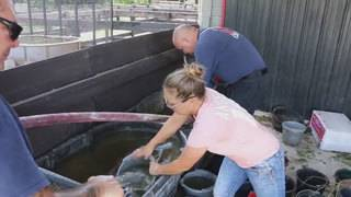 Firefighters provide water to horses in Coconut Creek, Margate