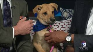 Pet of the Week: Sunny