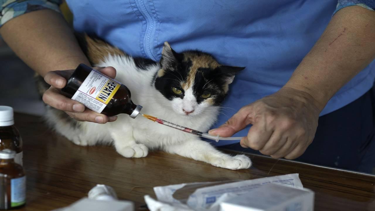 Peru Cat Hospice_1552843898923