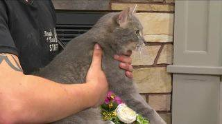 Angels of Assisi Pet of the Week: Smoke