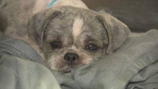 100 dogs rescued from filth at Miami-Dade home go up for adoption