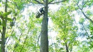 If you thought climbing trees was just for kids, think again!