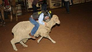 Mutton Bustin' application deadline for Ft. Bend Co. Fair approaching fast