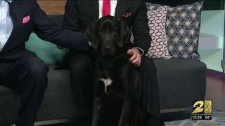Pet of the week: Ross