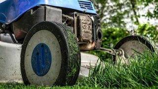 How to keep your lawn safe this summer, what plants and grass are best…