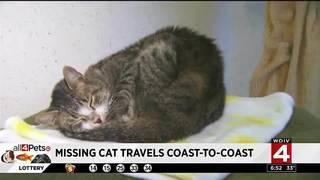 Missing cat travels coast-to-coast