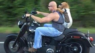 Daring motorcycle pup taking job as therapy dog