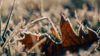 SE Michigan under frost advisory Tuesday morning