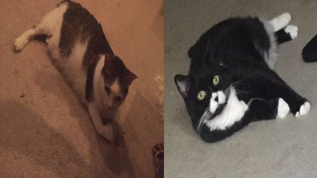 Cats that died in Coral Springs house fire