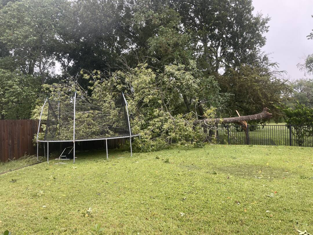 Large tree down in backyard with fence damage in Sienna