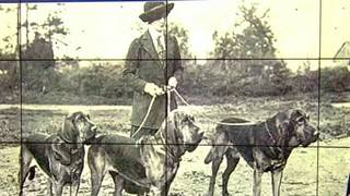 This is how K-9 policing got its start