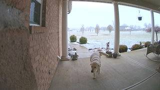 Dog caught on video stealing package from front door