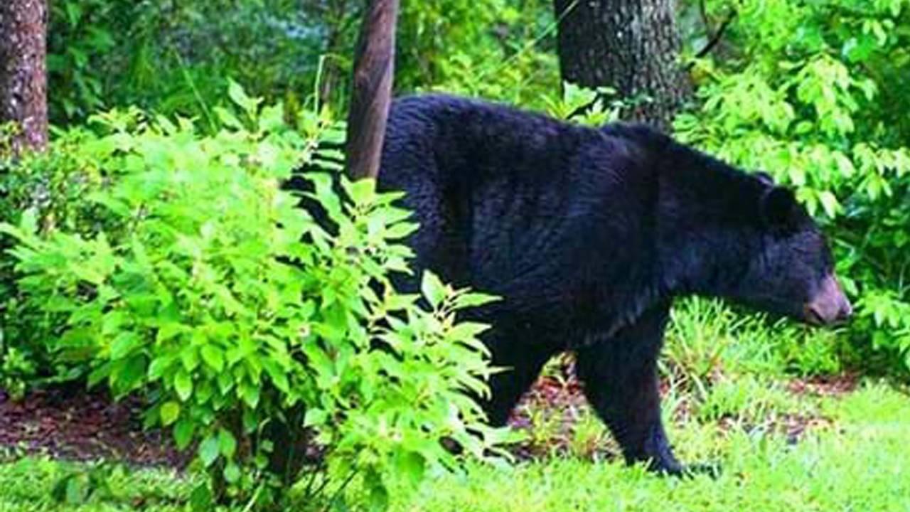 bear-in-the-garden.jpg fwc_1545245886581.jpg.jpg