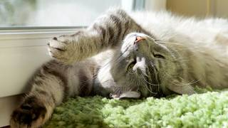 Tips for keeping your cat cool in warm weather