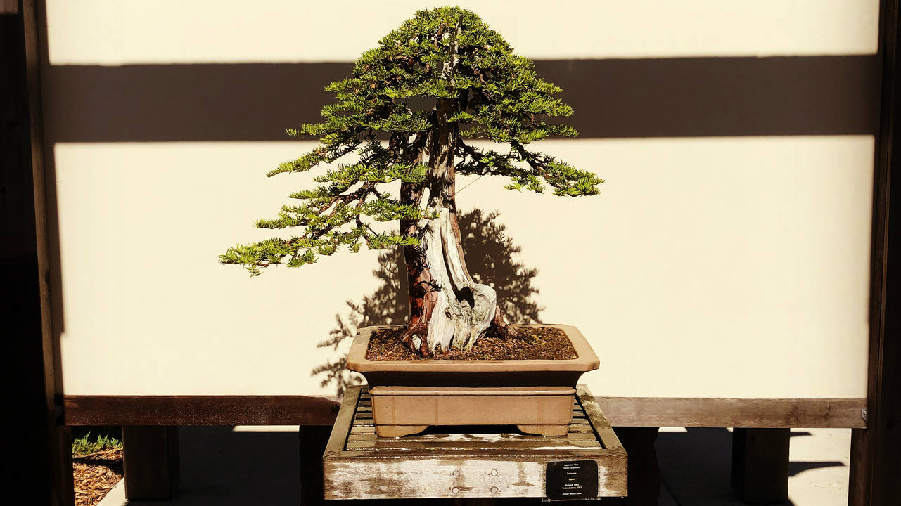 Bonsai at Matthaei Botanical Gardens_1531144027730.JPG.jpg