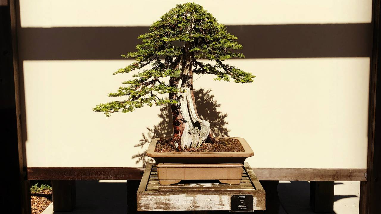 Bonsai at Matthaei Botanical Gardens_1531144027730.JPG.jpg