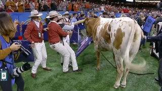 Don't mess with Texas: Longhorns mascot Bevo charges after Georgia&hellip&#x3b;