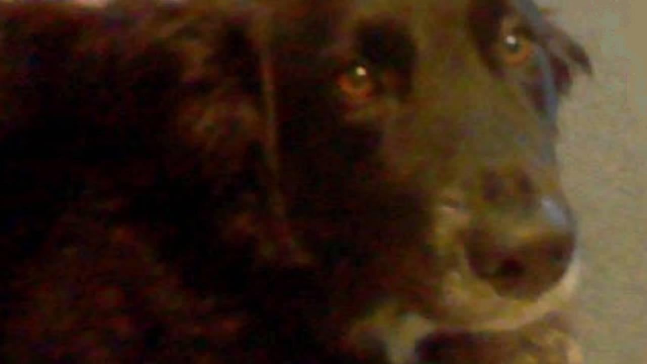 Armada teen April Millsap's dog Penny_27170556