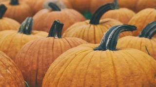 Pumpkin patches in the Houston area