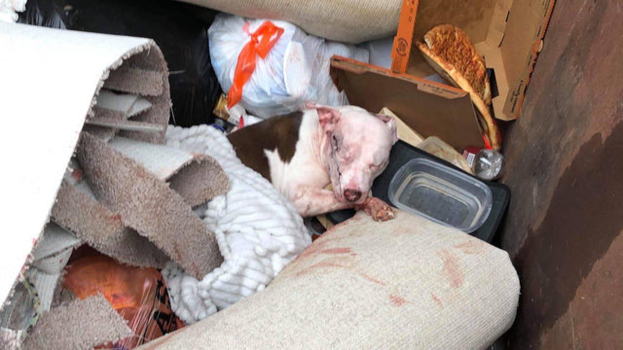 Karma dumped in dumpster_1549923672441.jpg.jpg