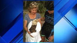 Bicyclist stops to help injured bald eagle along Heckscher Drive