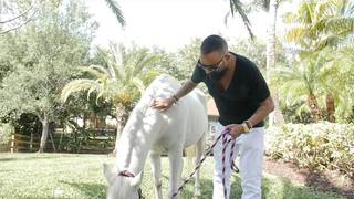 Horse from Miami Beach club is retiring to private barn, owner says