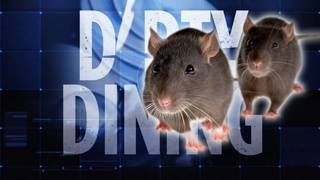 4 South Florida restaurants shut down due to rodent issues