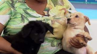 Pets of the Week: Mona and Lisa, the most adorable puppies