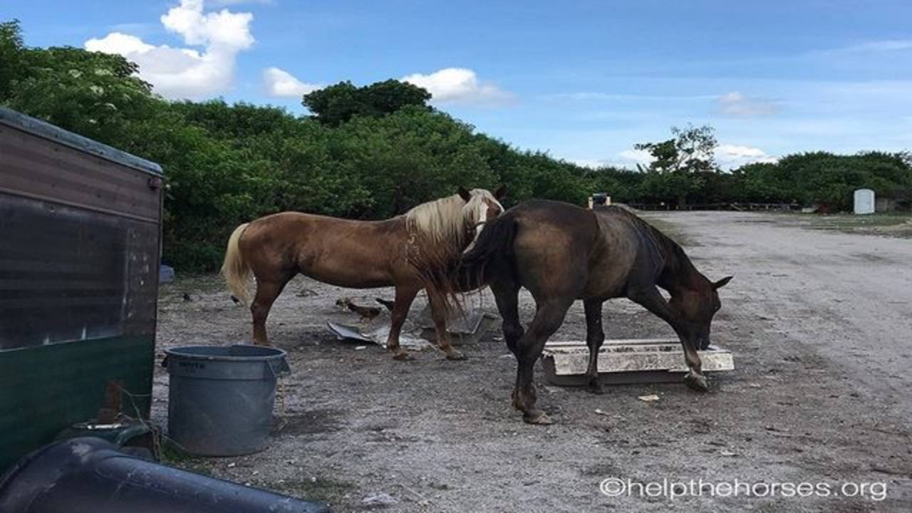 horses at slaughterhouse