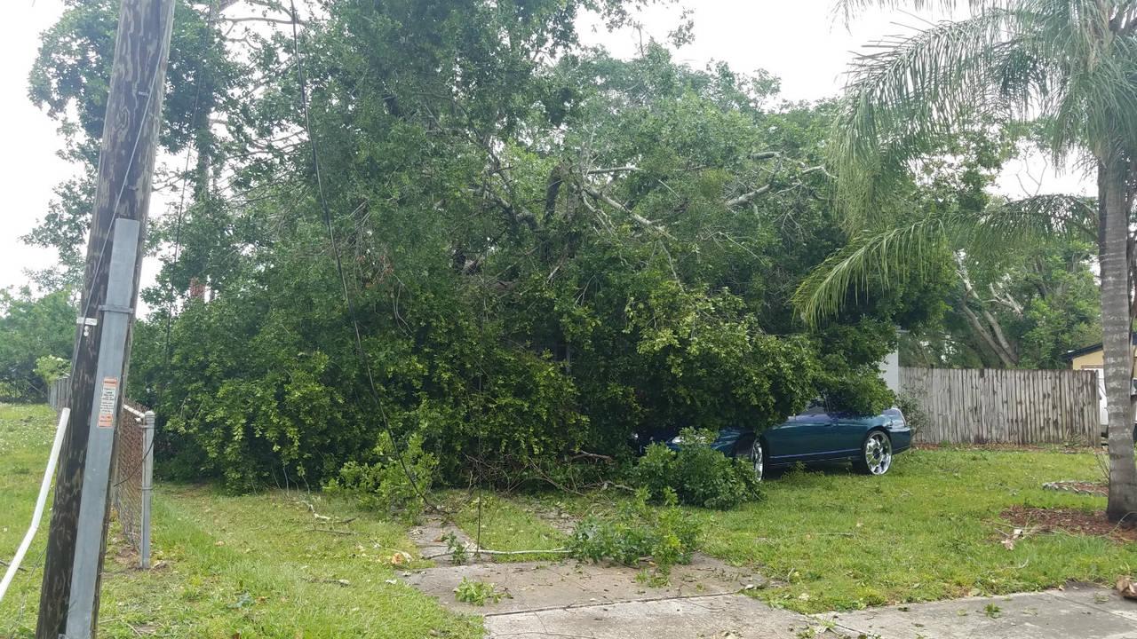 Tree onto car_1523823603659.jpg.jpg