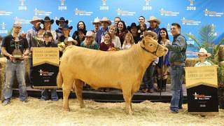 Grand Champion steer sells for whopping $410,000&#x3b; junior breaks record