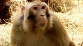 Here's everything we know about Dawkins, the primate who got loose at SA airport