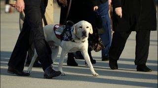 Sully the service dog honors his late friend George HW Bush