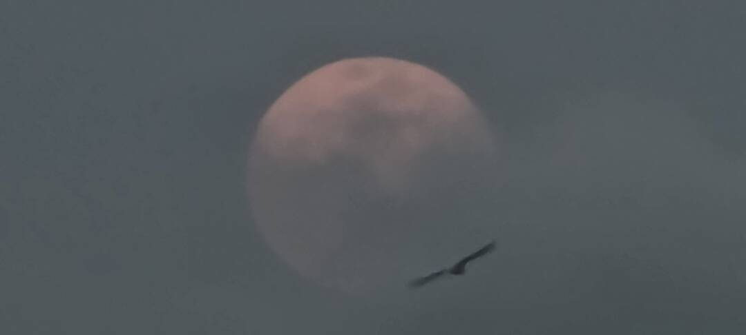 My shot of the Pink Moon. Enjoy your time 🙂