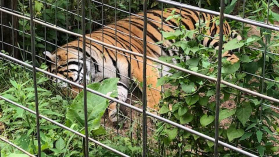 Zoo 4_1532727918223.jpg.jpg