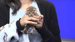 4's Pet Project: Finding Kittens