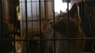 Clear the Shelters event held at Christiansburg Grand Home Furnishings
