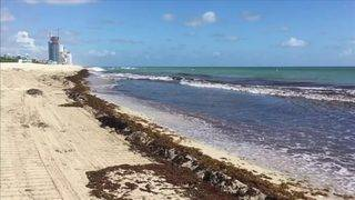Broward beaches test positive for low levels of red tide